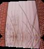 Vign_2012-04-11_011bon