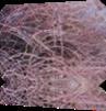 Vign_2012-04-12_006