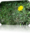 Vign_2012-05-07_024