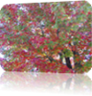 Vign_2012-09-28_003