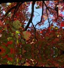 Vign_2012-09-28_004
