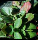 Vign_2012-10-02_014