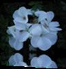 Vign_2013-07-29_004