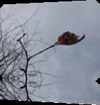 Vign_2013-10-11_047