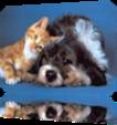 Vign_chat,_chien