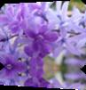 Vign_fleurs_icone
