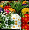 Vign_fleurs_multicolores_2