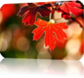 Vign_image_feuilles_automne