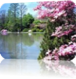 Vign_image_pour_diapo_salut_printemps