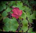 Vign_imagescarhrawd